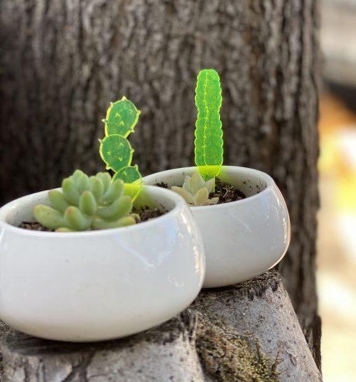 Cactus prickers